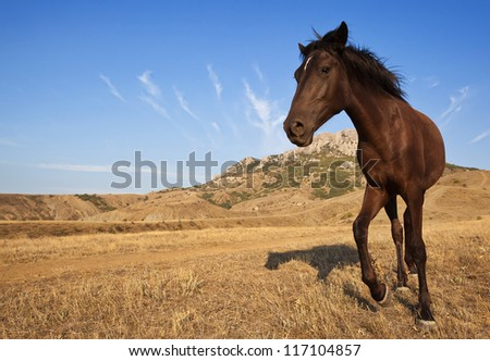 Brown horse in the wild on a dry grass field with mountains in the distance