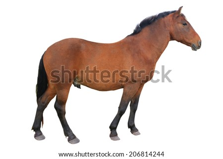 brown horse isolated on white - stock photo