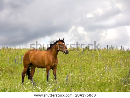 Brown horse on spring meadow on sky background - stock photo