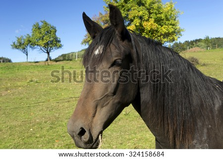 Brown Horse on the green Pasture - stock photo