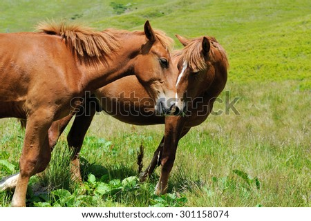 Brown horse on the pasture in mountain. Summer day - stock photo