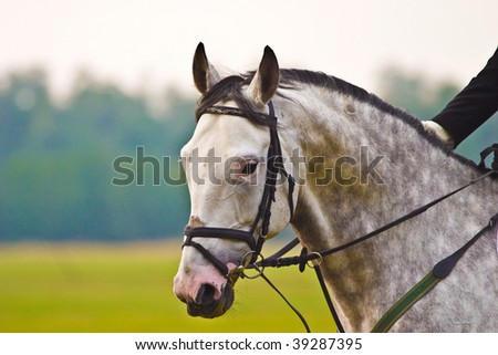 brown horse ride in sunny day afternoon - stock photo
