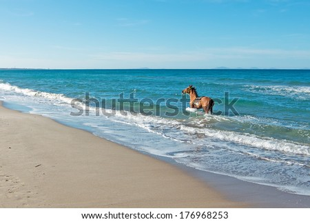 brown horse running in the sea
