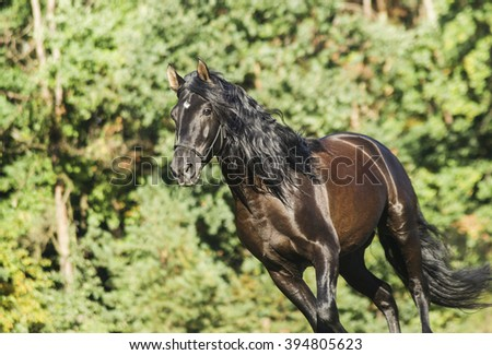 brown horse running on the green grass on a background of trees