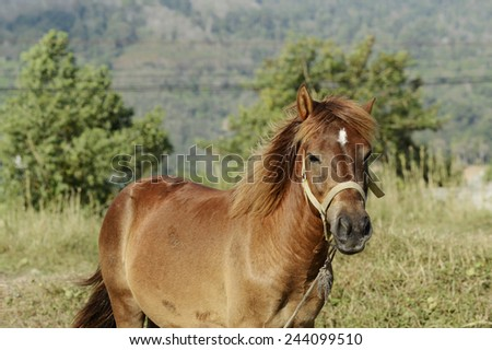 Brown horse standing in a field of grass - stock photo