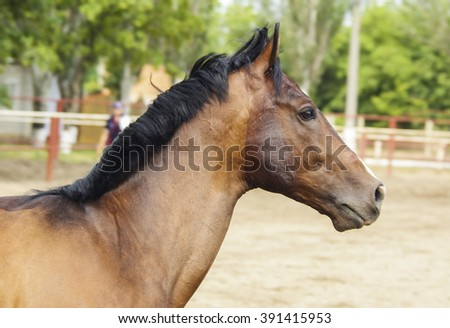 brown horse standing in a paddock next to a wooden fence
