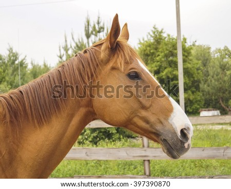 brown horse standing in a paddock next to the fence