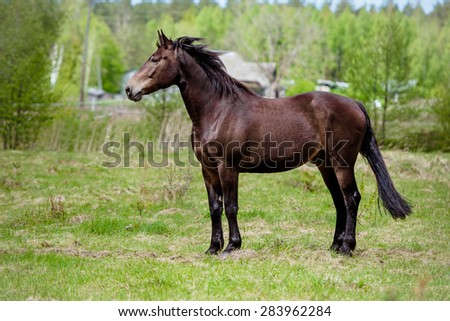 brown horse standing on a field