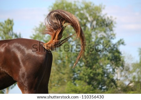 Brown horse swinging its tail to protect from insects - stock photo