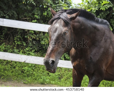 brown horse walking in the paddock on the sand next to the white fence on a background of green leaves