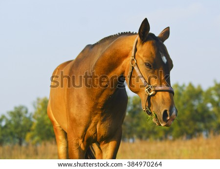 brown horse with a short black toothed mane are standing on the field