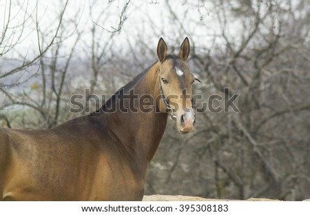 brown horse with a short mane are standing near the gray trees