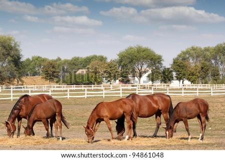 brown horses farm scene - stock photo