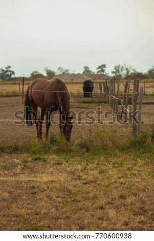 brown horses in the pens