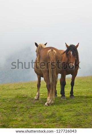 brown horses relaxing in the grass up in the mountains