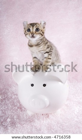 Brown kitten on white piggy bank on pink background
