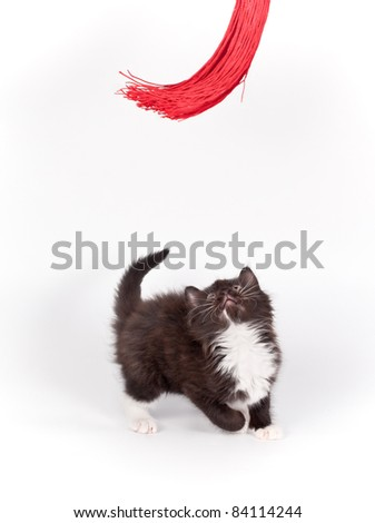 brown kitten playing with red tassel on white background