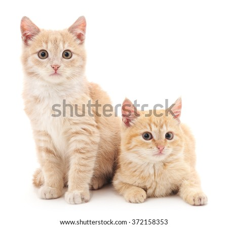 Brown kittens isolated on a white background.
