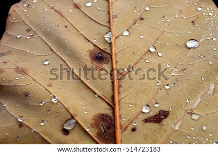 Brown leaf with raindrops