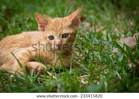 brown little  cat in garden