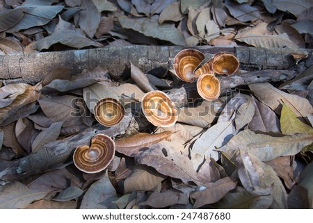 Brown mushrooms in the forest - stock photo