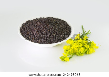 Brown Mustard seeds heap and mustard flower isolated on white background  - stock photo