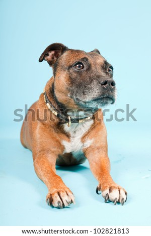 Brown old staffordshire isolated on light blue background. Studio shot.
