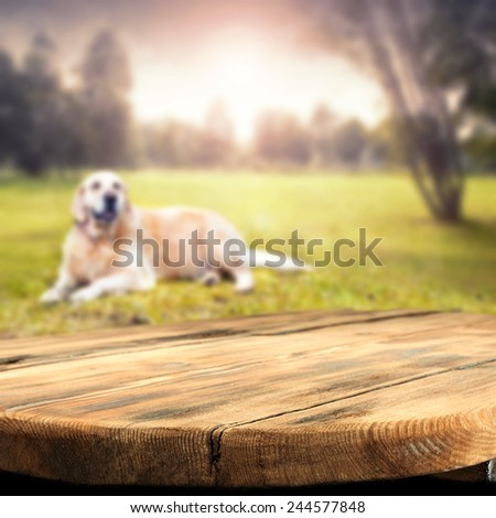 brown old table top and green grass with dog in park  - stock photo