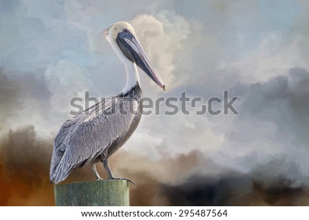 Brown Pelican at Avery Island - stock photo