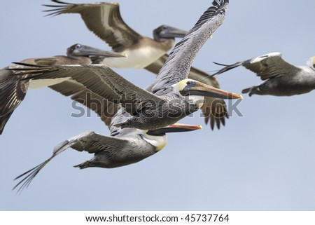 Birds of north america stock images royalty free images for Renew nc fishing license