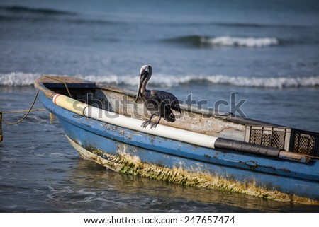 Brown Pelican sitting on a boat - stock photo