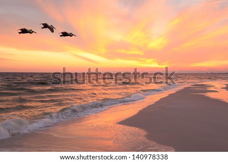 Brown Pelicans Flying in Formation at Sunset on Florida Beach - stock photo