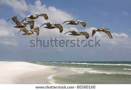 Brown Pelicans Flying over White Sand Beach