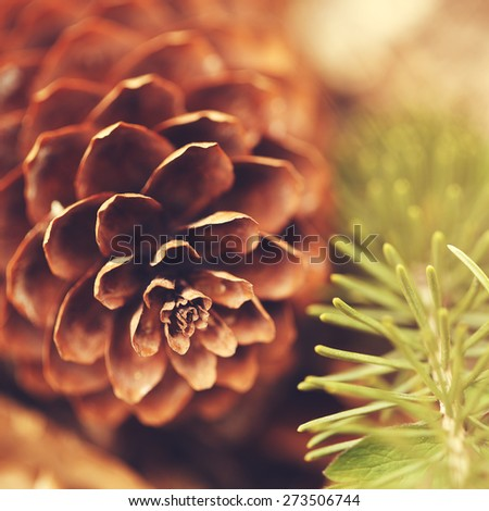 brown pine cone and green pine twig - stock photo