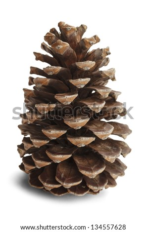 Brown pine cone isolated on white background. - stock photo