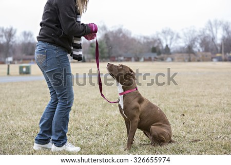 Brown Pitbull mix being trained by a woman - stock photo