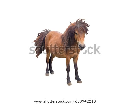 Brown pony horse standing isolated on white