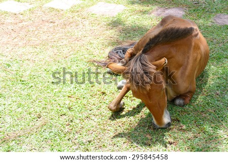 brown pony is eating grass in the farm