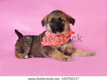 Brown puppy in orange bandanna lying on pink background