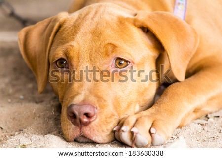 brown puppy lying on the ground