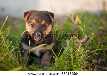 Brown puppy sitting on the green grass