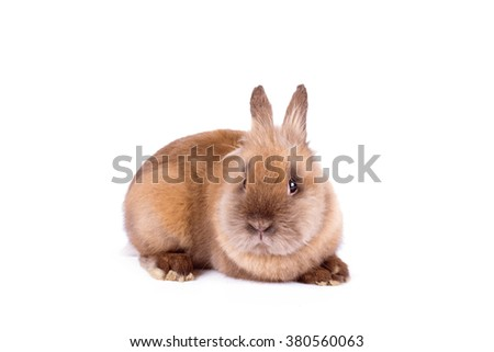 Brown rabbit isolated on a white background