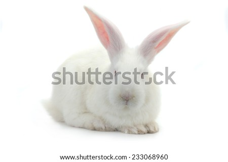 brown rabbit on a white background - stock photo
