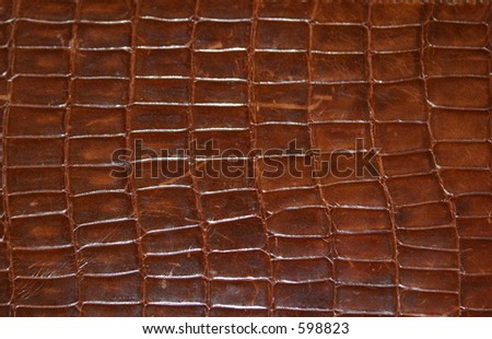 Brown Reptile Print