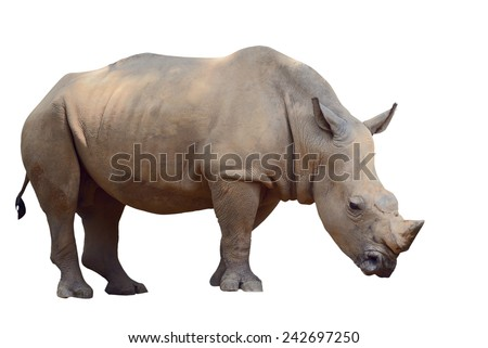 Brown rhino isolated on white