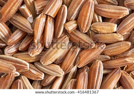 brown rice grain background  - life size macro