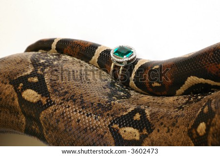 Brown snake with modern jewelrys 8 - stock photo