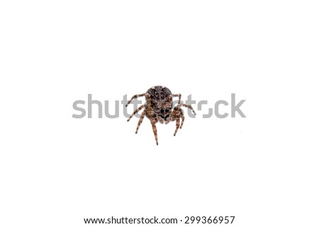 Brown spider isolated on a white background