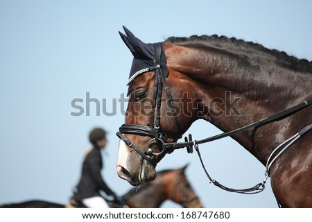 Brown sport horse portrait on sky background