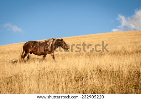 Brown stallion with gold mane in the prairie with blue sky background